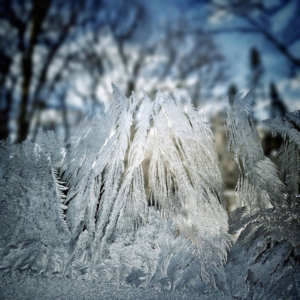 Photograph - A Forest Of Frost Upon My Window Pane by Natasha Marco