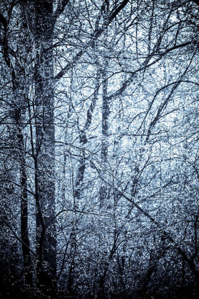 Photograph - A Frost Covered Decidious Forest. by Alex Grichenko