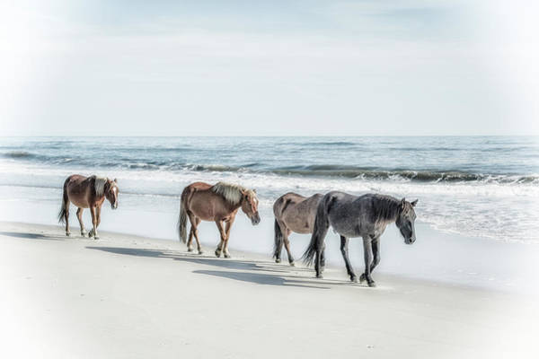 Corolla Photograph - A Group Of Wild Spanish Mustangs by Rona Schwarz