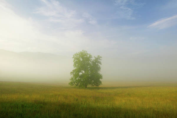 Photograph - A Hickory Tree In A Misty Landscape by Michael Melford