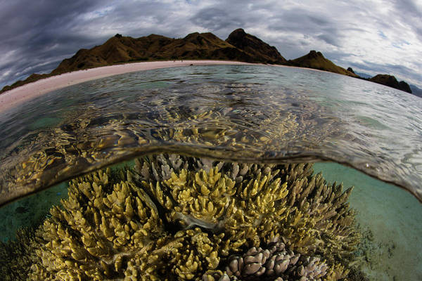 A Large Colony Of Soft Coral Grows Art Print