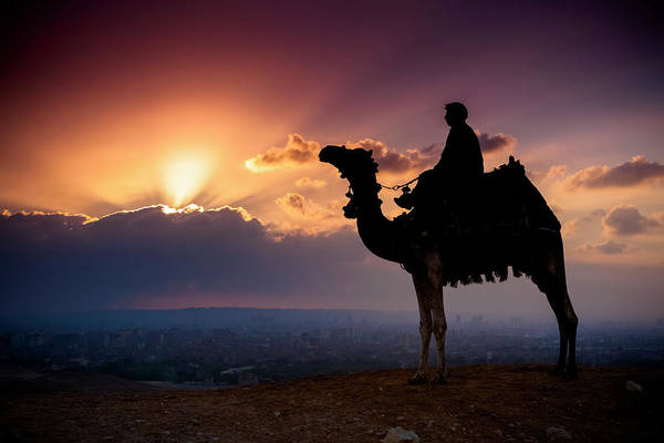 Wall Art - Photograph - A Lone Camel And Rider Stand In Front by Matt Brandon