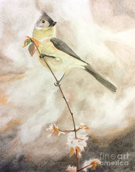 Titmouse Drawing - A Lonely Lady Tuft  by Ambre Wallitsch
