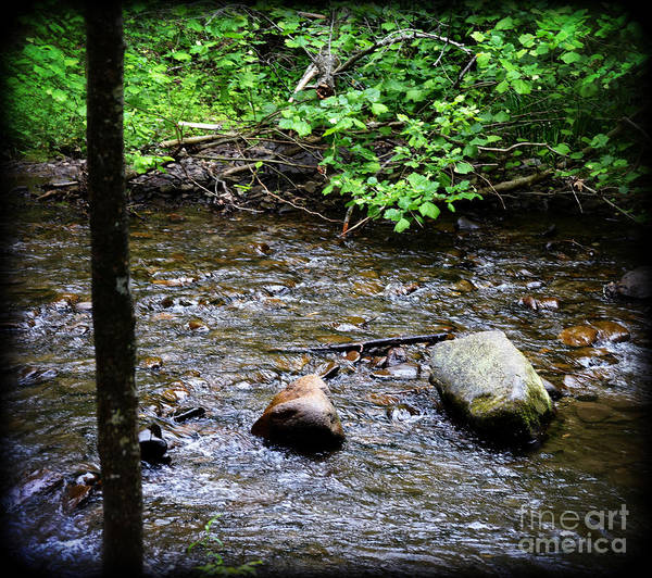 Wall Art - Photograph - A Mountain Stream by Eva Thomas