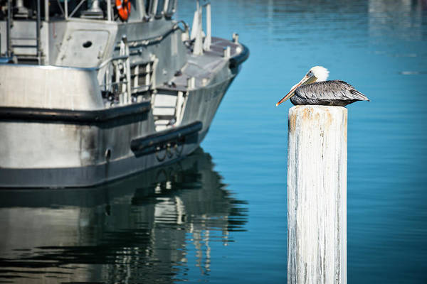 Dock Of The Bay Photograph - A Pelican Sitting On A Post by Rob Hammer