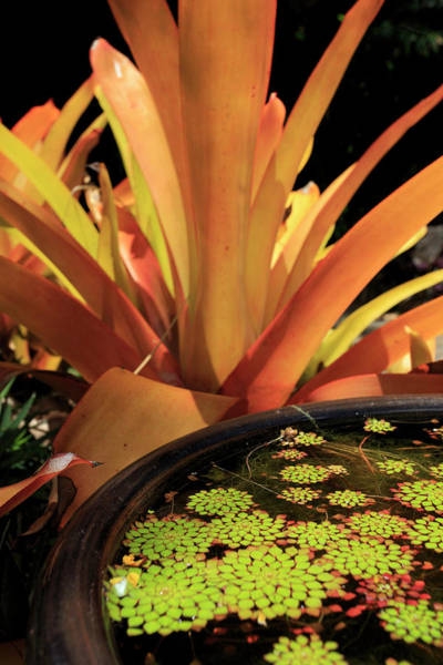 Far North Queensland Wall Art - Photograph - A Pot Plant Display In The Cairns by Paul Dymond