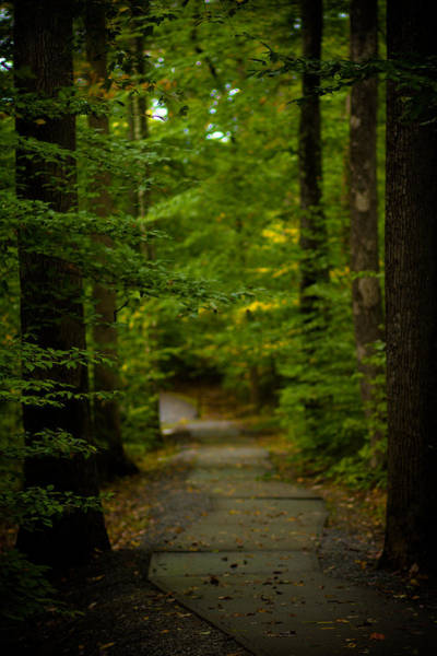 West Virginia Photograph - A Walk In The Woods by Shane Holsclaw