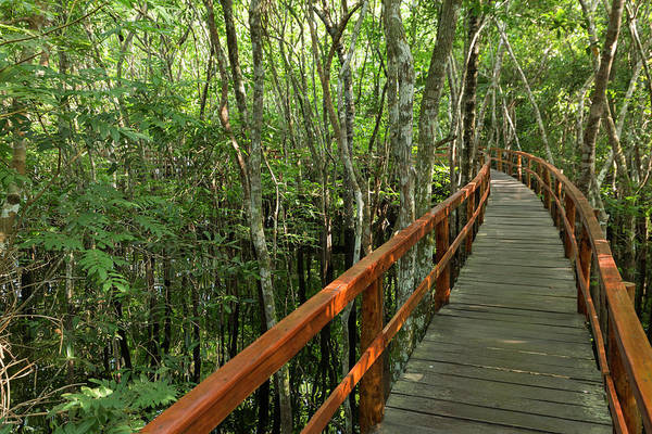 Wall Art - Photograph - A Wooden Walkway At A Jungle Lodge by James White