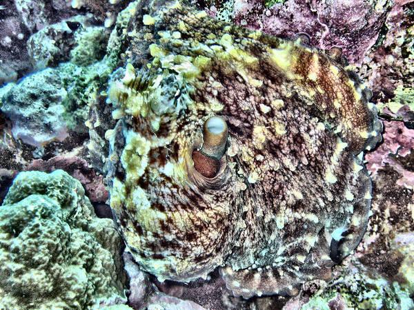 Reef Diving Digital Art - Octopus 2 by Roy Pedersen