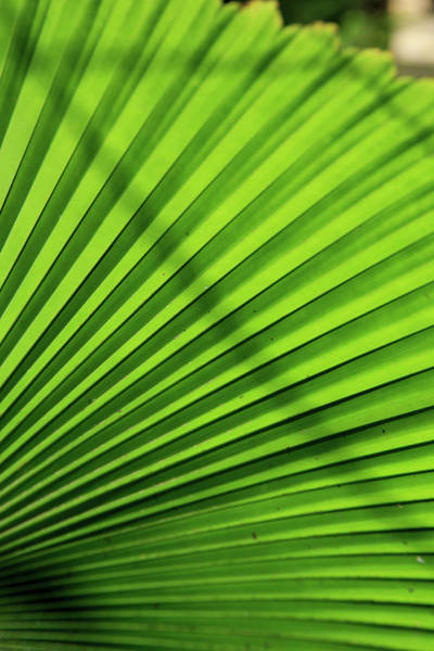 Far North Queensland Wall Art - Photograph - Abstract Patterns Caused by Paul Dymond