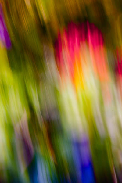 Promotion Photograph - Abstraction Of Butterflies by Jon Glaser