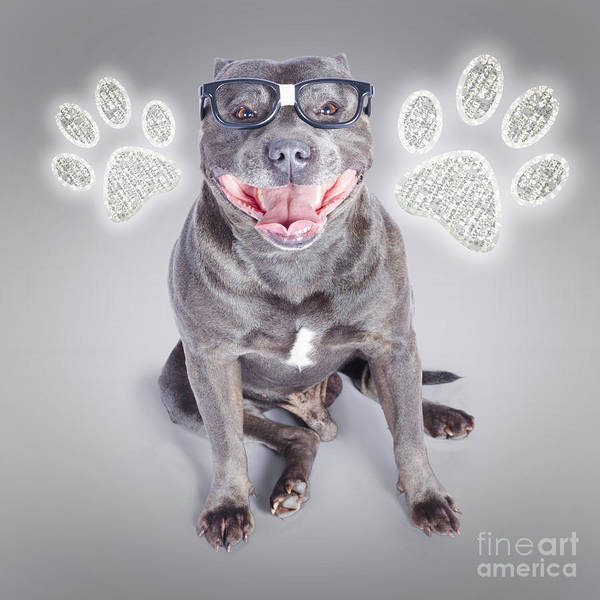 Intelligent Photograph - Access To Smart Dog Training by Jorgo Photography - Wall Art Gallery