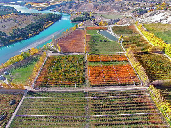 Aerial Over Autumn Orchards Art Print by David Wall