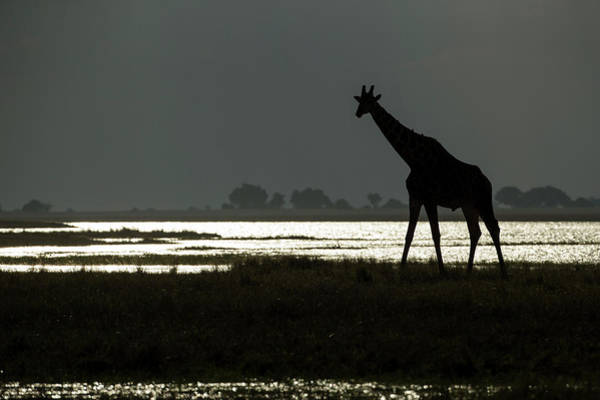 Botswana Photograph - Africa, Botswana, Chobe National Park by Paul Souders