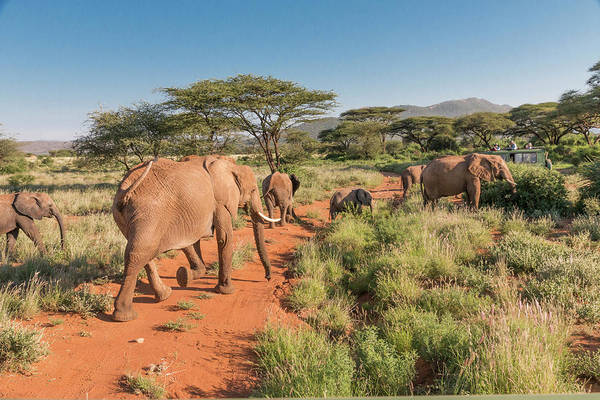 African Elephant Photograph - Africa, Kenya, Samburu National Reserve by Emily Wilson