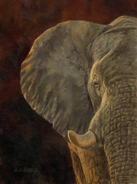 Ears Painting - African Elephant by David Stribbling