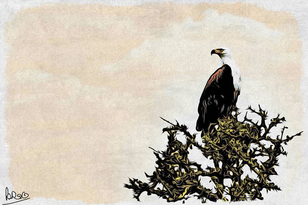 Art Print featuring the photograph African Fish Eagle by Perla Copernik