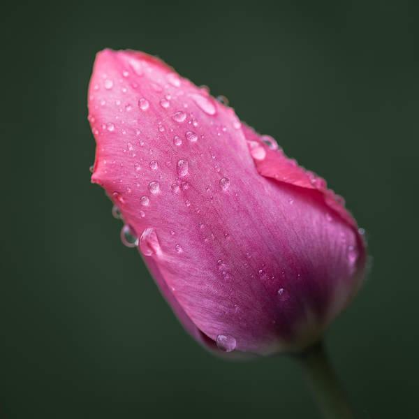 Canon Eos 6d Photograph - After Rain by Jakub Sisak