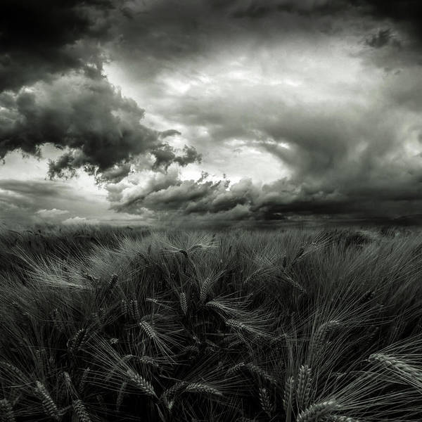 Wheat Wall Art - Photograph - After The Storm by Franziskus Pfleghart