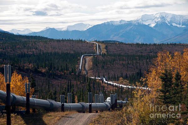 Wall Art - Photograph - Alaska Oil Pipeline by Mark Newman