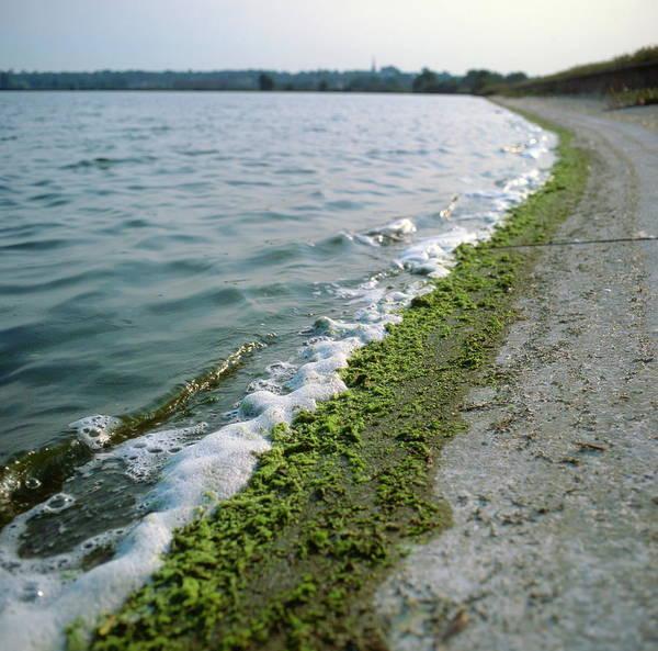 Wall Art - Photograph - Algal Scum by Robert Brook/science Photo Library
