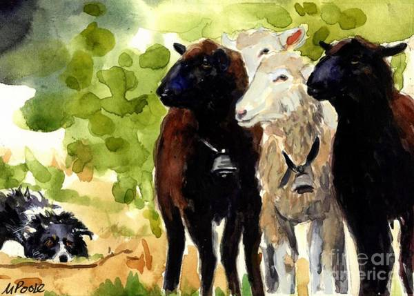 Border Collie Painting - All Eyes by Molly Poole