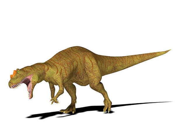 Palaeozoology Wall Art - Photograph - Allosaurus Dinosaur by Friedrich Saurer