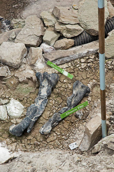 Historical Marker Photograph - Allosaurus Dinosaur Leg Bone Fossils by Jim West