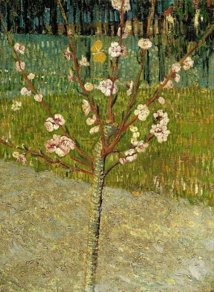 Almond Painting - Almond Tree In Blossom by Vincent van Gogh