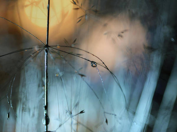 Tender Photograph - Almost Dark by Heidi Westum