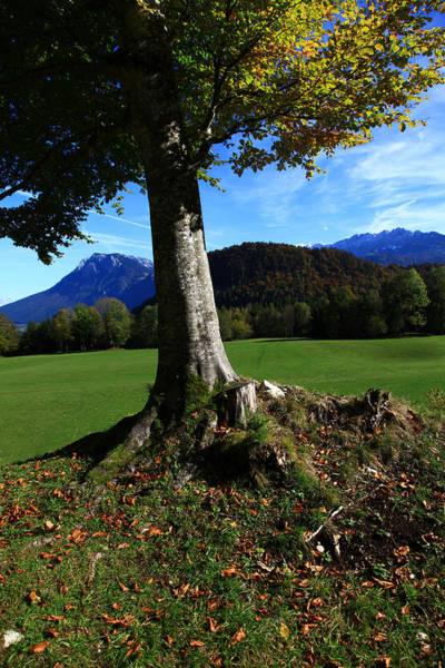 Wall Art - Photograph - Alpine Tree by Falko Follert