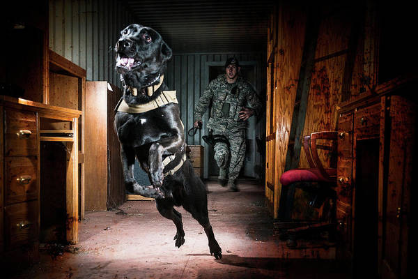 Base Jumping Photograph - An Air Force Security Forces K-9 by Stacy Pearsall