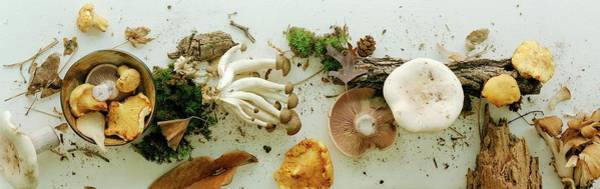 White Background Photograph - An Assortment Of Mushrooms by Romulo Yanes