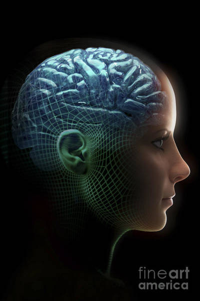 Photograph - Android Brain Female by Science Picture Co