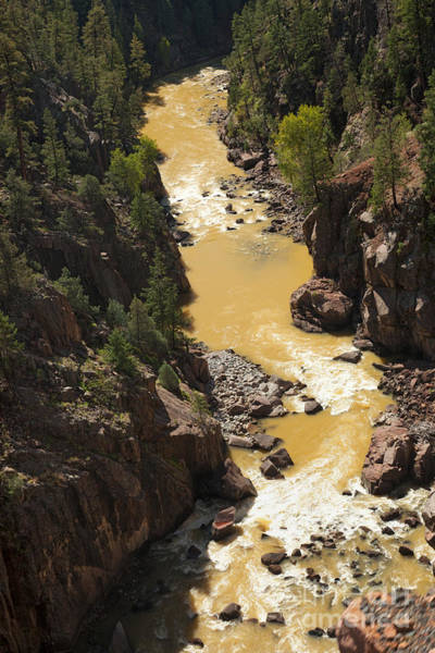 Photograph - Animas River Along The Durango And Silverton Narrow Gauge Railroad by Fred Stearns