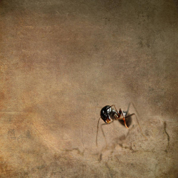 Fauna Mixed Media - ant by Heike Hultsch