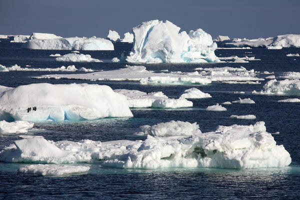 Ice Floe Photograph - Antarctic Sea Ice by Steve Allen/science Photo Library