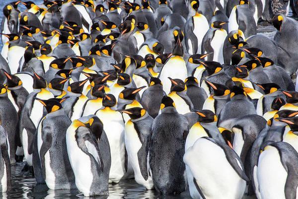 Wall Art - Photograph - Antarctica, South Georgia Island by Hollice Looney