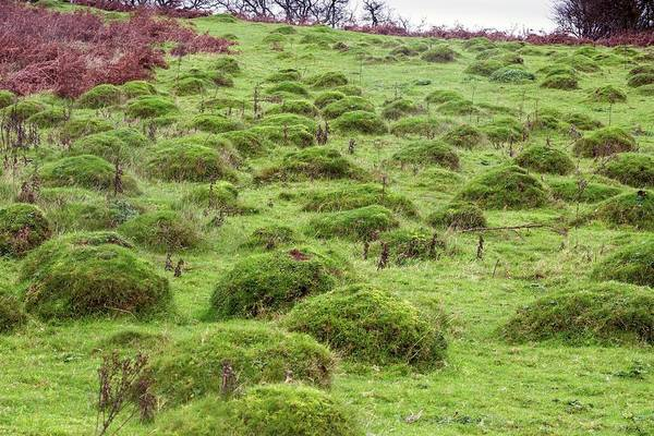 Exmoor Photograph - Anthills In Pasture by Bob Gibbons/science Photo Library