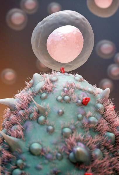 Immune System Wall Art - Photograph - Antigen Presentation by Tim Vernon