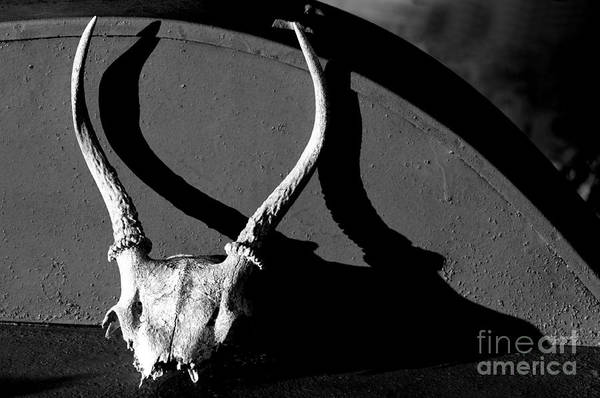 Wall Art - Photograph - Antlers On Hay Baler by Thomas R Fletcher