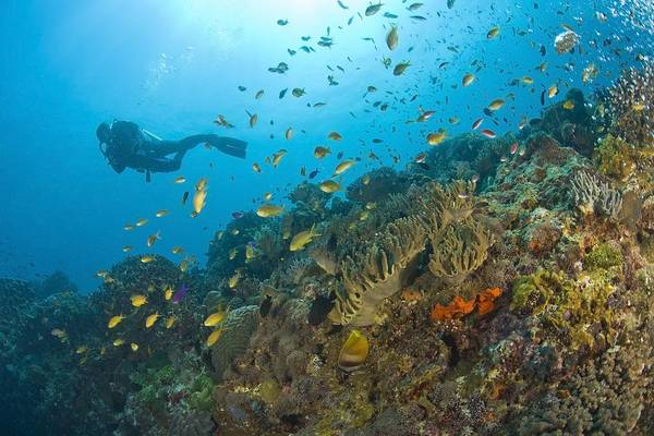 Free Dive Wall Art - Photograph - Apo Island Marine Park, Negros Oriental by Stuart Westmorland