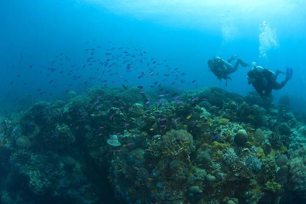 Free Dive Wall Art - Photograph - Apo Island Marine Park, Philippines by Stuart Westmorland