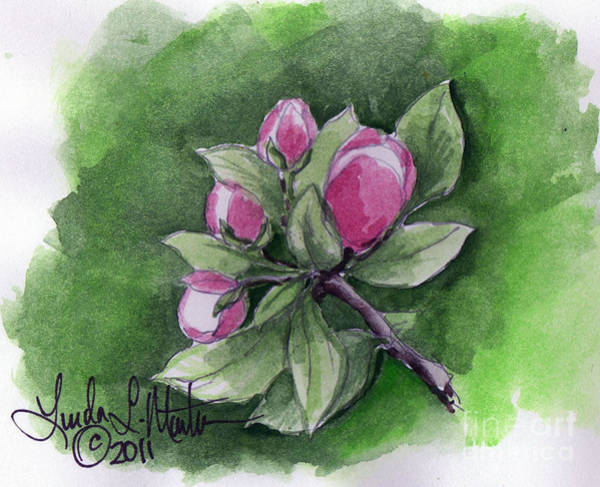 Painting - Apple Blossoms by Linda L Martin