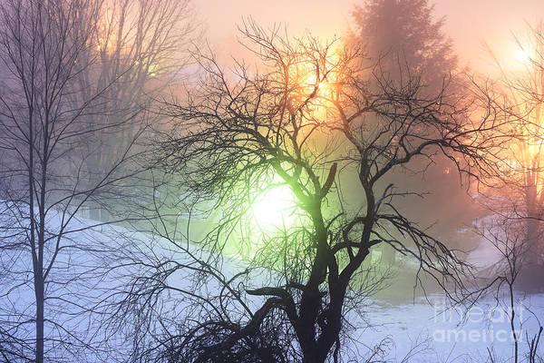 Photograph - Apple Tree In Winter Fog by Thomas R Fletcher