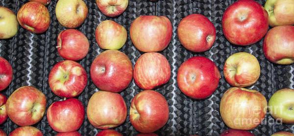 Photograph - Apples by Steven Ralser