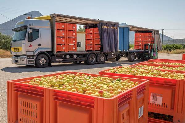 Trailer Photograph - Apricot Harvest Near Mycenae by David Parker/science Photo Library