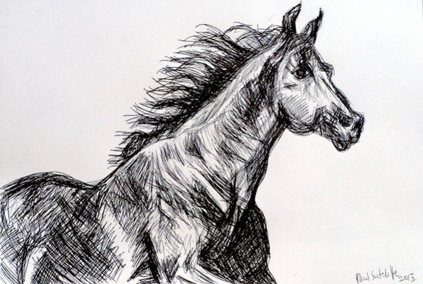 Drawing - Arabian Horse by Paul Sutcliffe