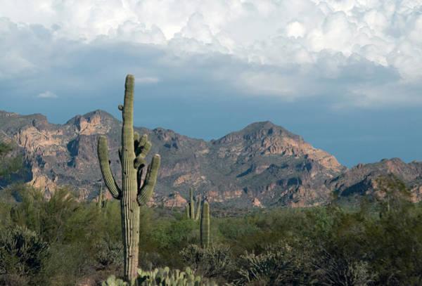 Photograph - Arizona Desert by Tam Ryan