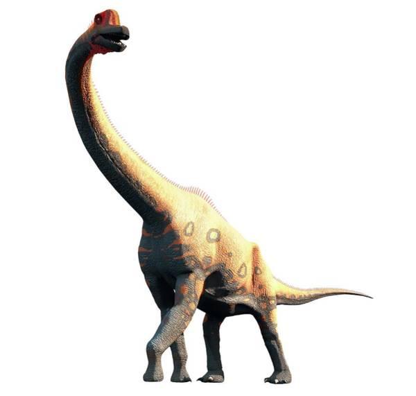 Wall Art - Photograph - Artwork Of Brachiosaurus by Mark Garlick/science Photo Library